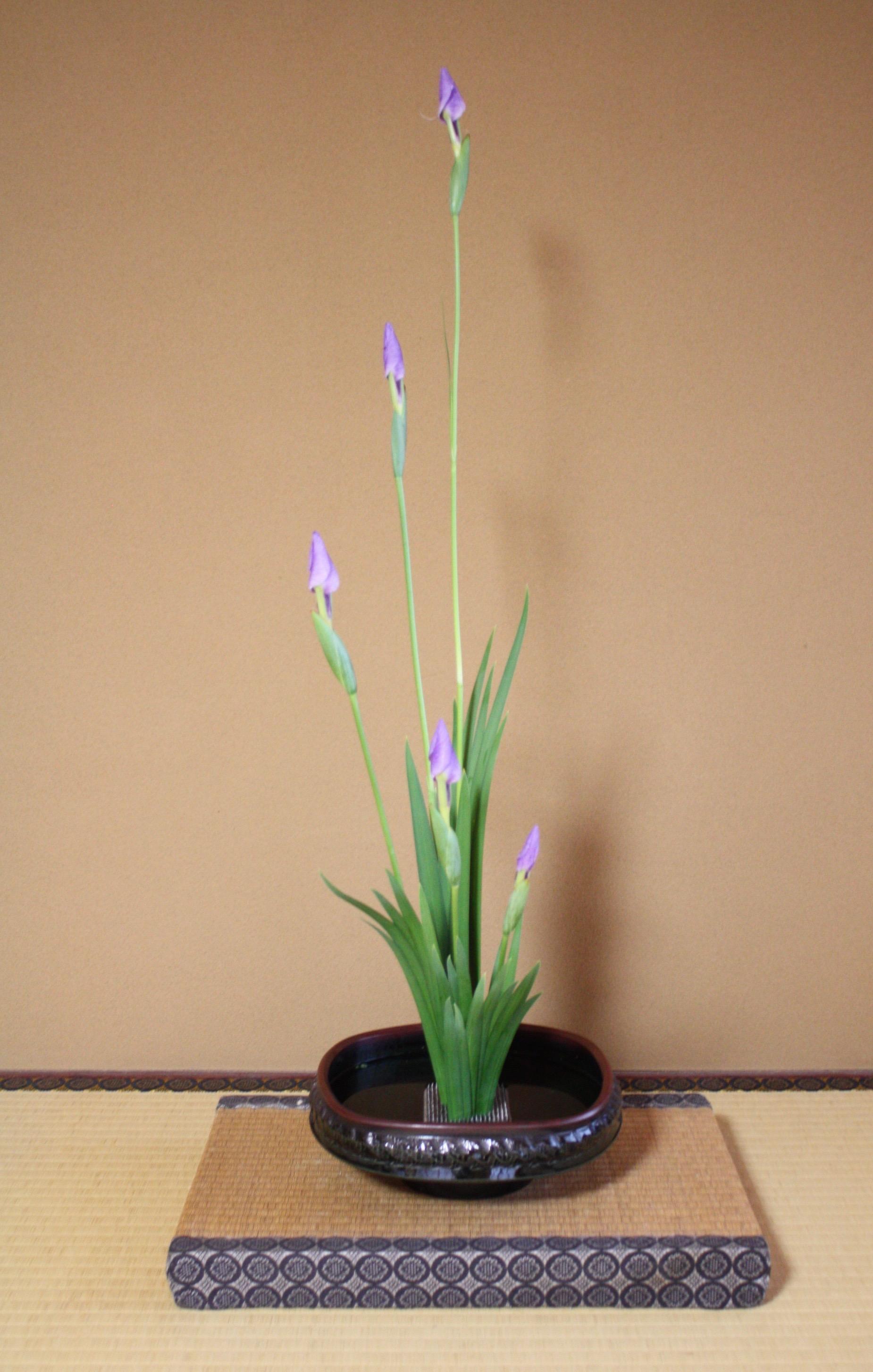 菖蒲のお生花